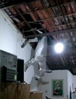 INUSITADO: JUMENTO FICA PRESO EM TELHADO DE RESIDÊNCIA NO SERTÃO DA PARAÍBA