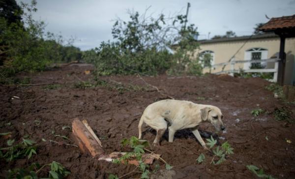 Animais também começara a ser resgatados em Brumadinho. Foto: AFP / Mauro PIMENTEL