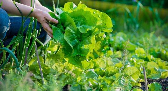 Secretaria de Educação abre chamada pública para Agricultura Familiar