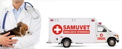 Prefeitura de Garanhuns anuncia a criação de Samu para atendimento a animais acidentados e vítimas de maus tratos