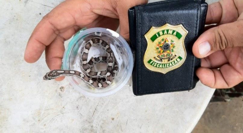 Ibama apreende duas serpentes em encomenda dos Correios no Recife; uma delas seria entregue em Garanhuns